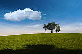 A small group of young trees are standing on the top of a hill. There is a clear blue sky above and a big white cloud.