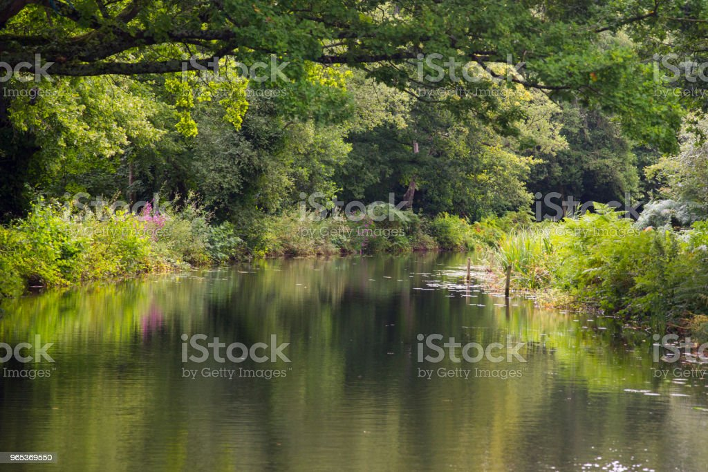 Summer trees reflected in a river royalty-free stock photo