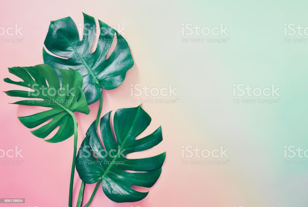 Summer tropical background royalty-free stock photo