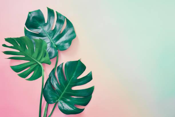 summer tropical background - влажный стоковые фото и изображения