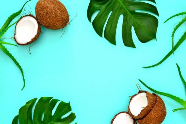 yaz tropikal arka plan - hindistan cevizi tropik meyve stok fotoğraflar ve resimler
