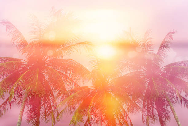 Summer tropical backgrounds with palms picture id817557798?b=1&k=6&m=817557798&s=612x612&w=0&h=itl22myf8ir2yudjgewgpx rbr5diypbtxpijwy6nsi=