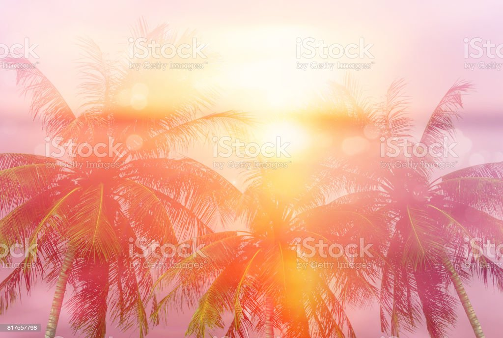Summer tropical backgrounds with palms - foto stock