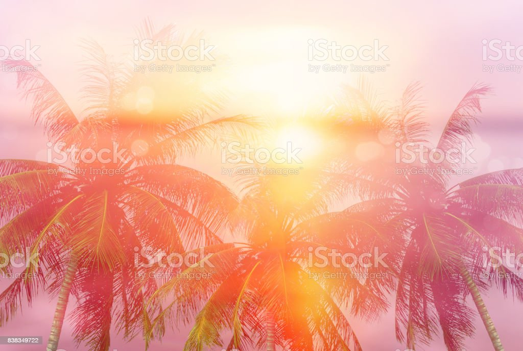 Summer tropical backgrounds with palms stock photo