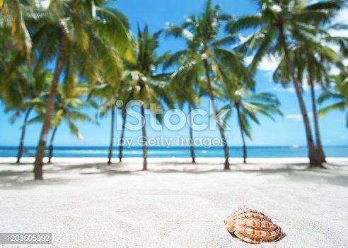 Summer tropical beach copy space scene