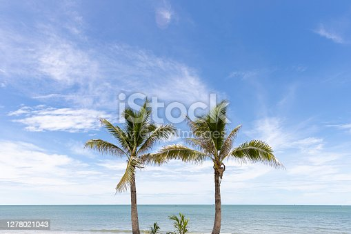 Coconut trees standing next to a beach under bright blue cloudy sky with afternoon light