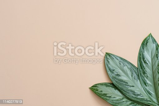 666980960 istock photo Summer tropical composition. Green tropical leaves on cream background. Summer concept. Flat lay, top view, copy space 1140277513