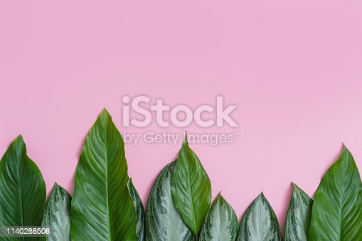 666980960 istock photo Summer tropical composition. Green tropical leaves on pink background. Summer concept. Flat lay, top view, copy space 1140286506