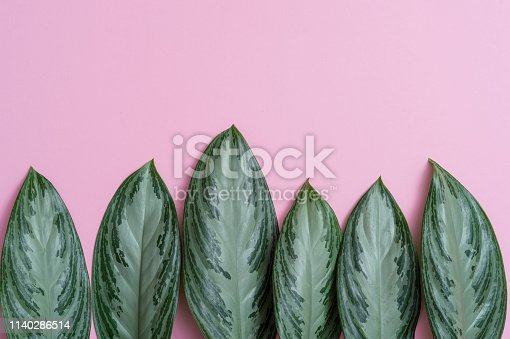 666980960 istock photo Summer tropical composition. Green tropical leaves on pink background. Summer concept. Flat lay, top view, copy space 1140286514
