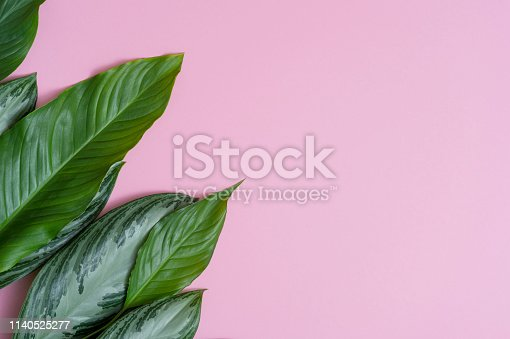 666980960 istock photo Summer tropical composition. Green tropical leaves on pink background. Summer concept. Flat lay, top view, copy space 1140525277
