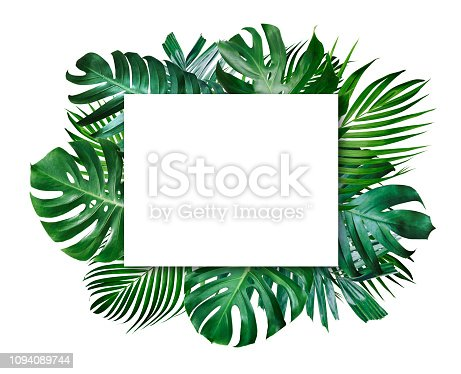 istock Summer tropical leaves and blank frame with copy space on white background 1094089744