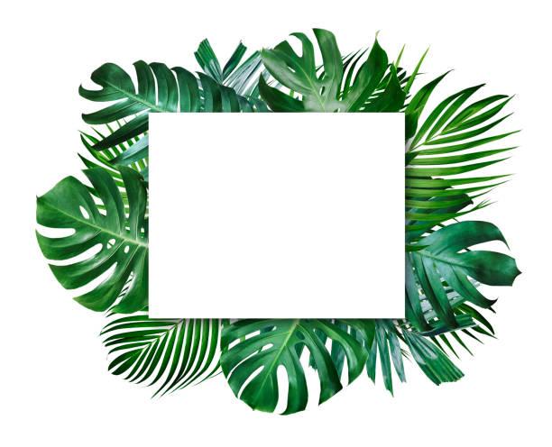 Sommer tropische Blätter und leeren Frame mit textfreiraum auf weißem Hintergrund – Foto
