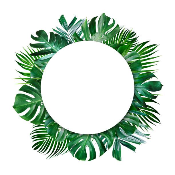 Sommer tropische Blätter und blanker Rahmen mit Kopierplatz auf weißem Hintergrund – Foto