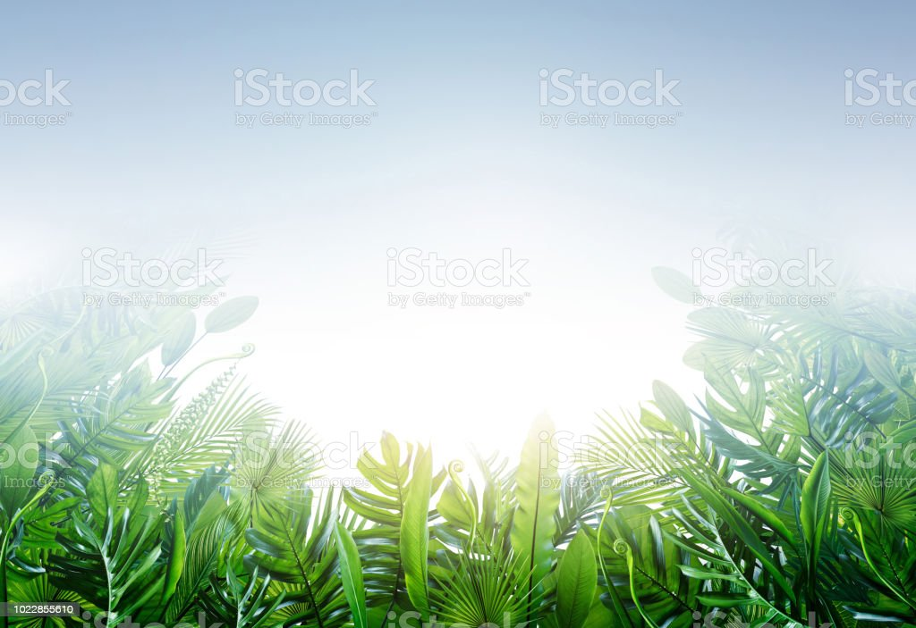 Summer tropical leaves for banner and background, different leaf, rain forest plant. copy space and blank text. stock photo