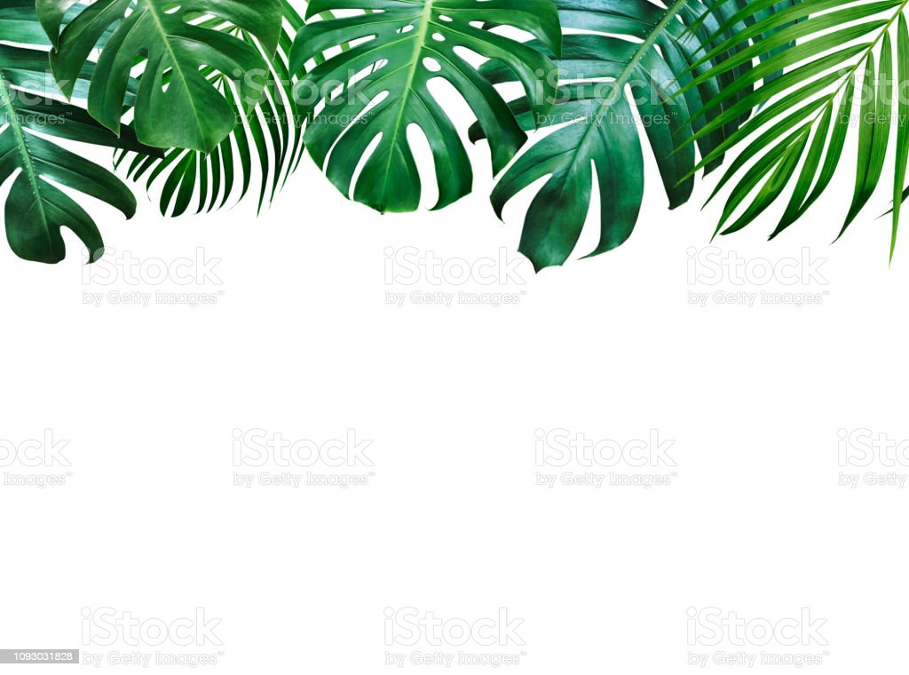 Jk3gl119 Yphdm Tropical leaves frame with space for text, banner, tropic rainforest foliage border, poster, wedding invitation, summer greeting card design element vector illustration on white background. 1