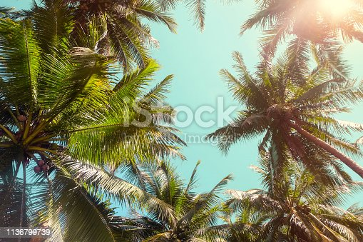 Full frame shots coconut palm tress from below, with a sky backgrounds