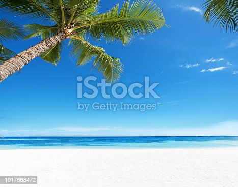 Summer Tropical Paradise Beach Background
