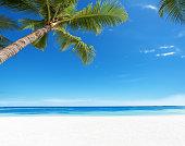 Summer Tropical Paradise Beach Background