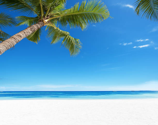 Summer tropical paradise beach background picture id1017663472?b=1&k=6&m=1017663472&s=612x612&w=0&h=mqom4lzuevxp3elwpwzxocvr0bbf38vla0xl6bduiye=