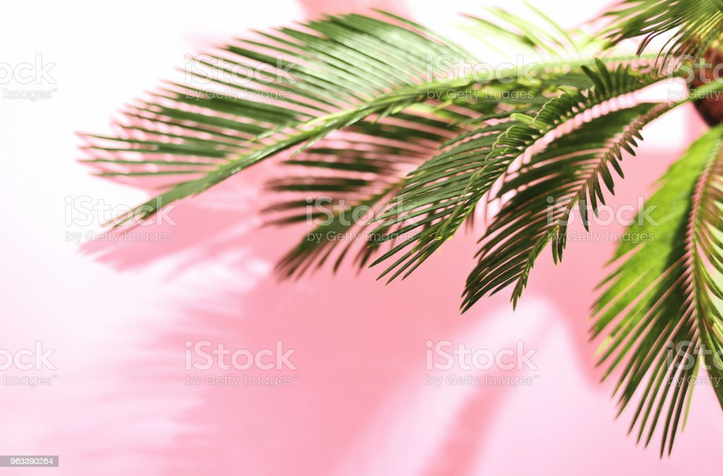 Summer tropical pastel background with palm - Zbiór zdjęć royalty-free (Beach Party)