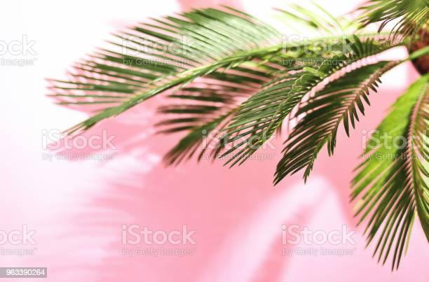 Lato Tropikalne Pastelowe Tło Z Palmą - zdjęcia stockowe i więcej obrazów Plaża