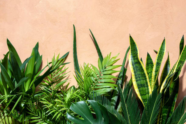 summer tropical urban garden concept - kamerplant stockfoto's en -beelden