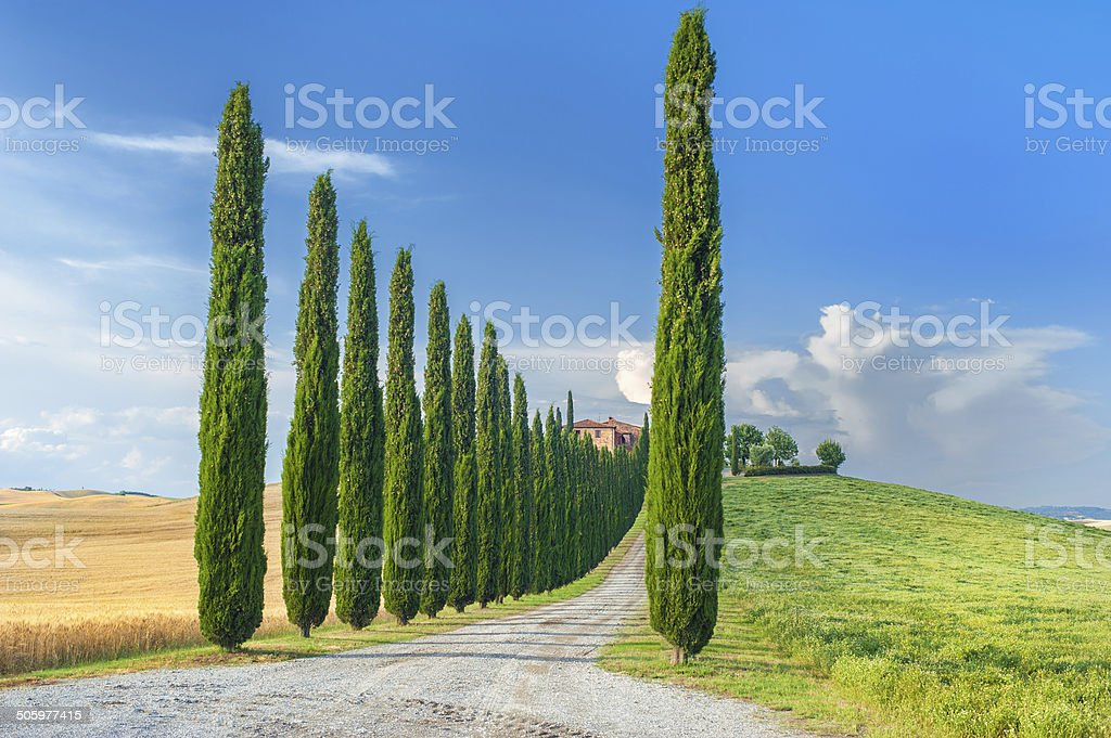 Summer Tuscan landscape, green field and blue sky stock photo