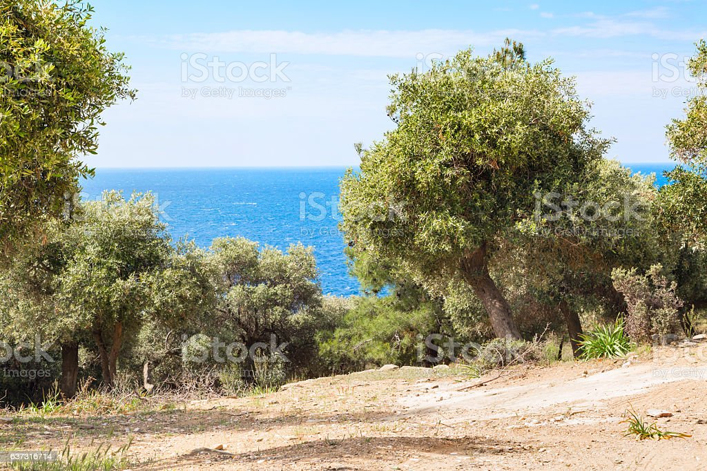 Summer vacation background with greek island Thasos, olive trees and stock photo