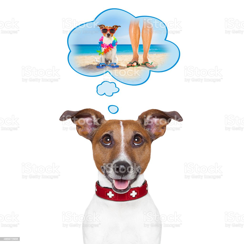 summer vacation dog stock photo