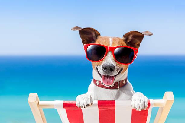 summer vacation dog stock photo