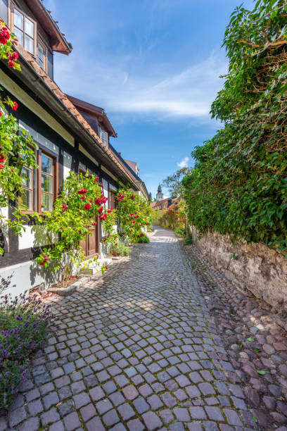 summer view of narrow cobblestone street with surrounding rose bushes and buildings. stock photo