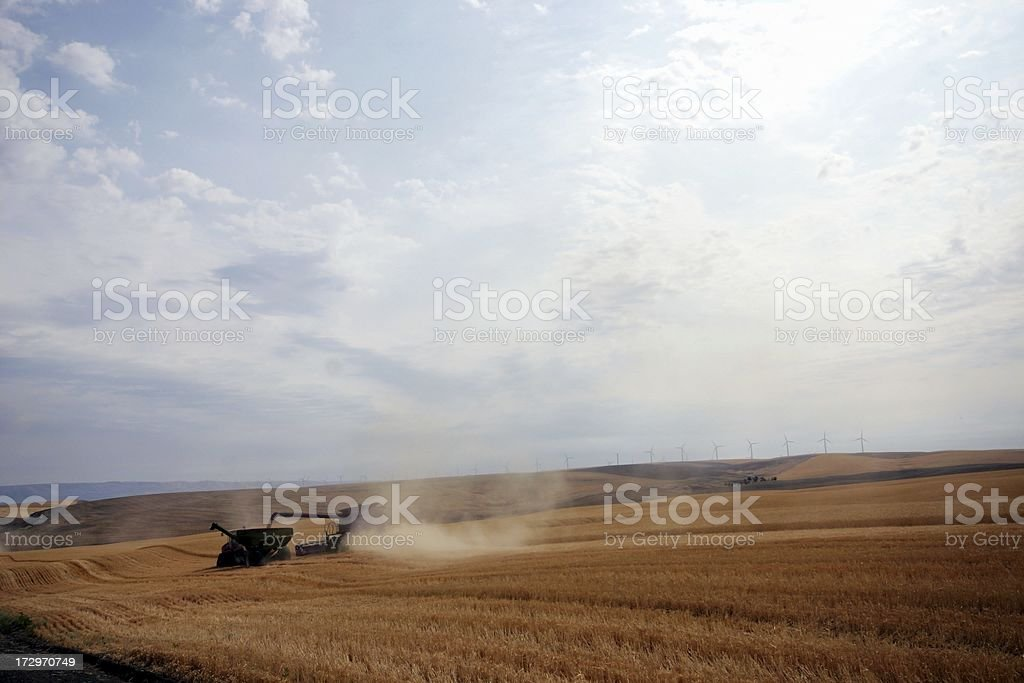 Summer Wheat Harvest royalty-free stock photo