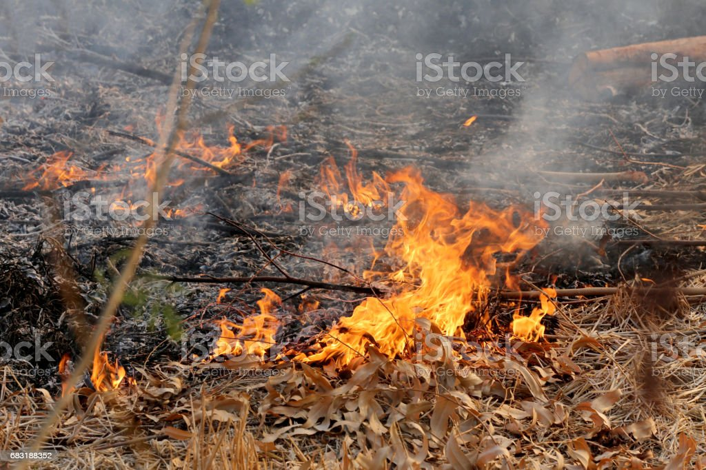Summer wildfires burning in the Forest at rural area of Khon Kaen. 免版稅 stock photo