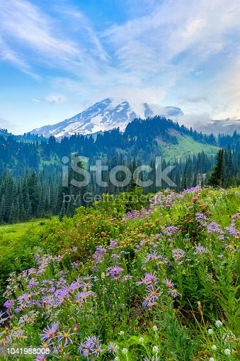 Summer wildflowers blooming with Mount Rainier in the background