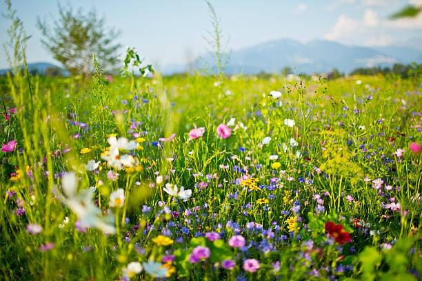 Verão flores silvestres - foto de acervo