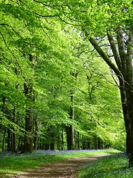 bosco estivo con campanule - forest bathing foto e immagini stock