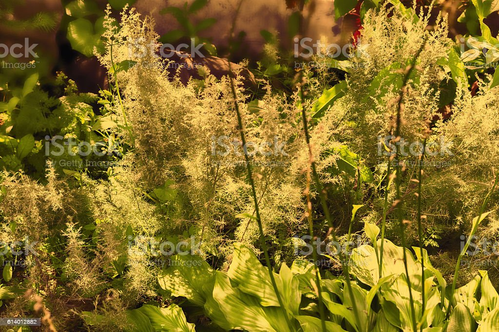 Summer yellow plants stock photo
