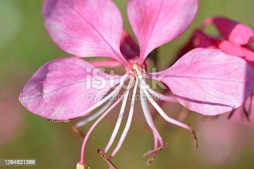 istock Summerflower 1264831388
