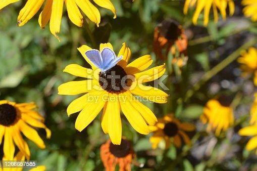 istock Summerflower 1266657585
