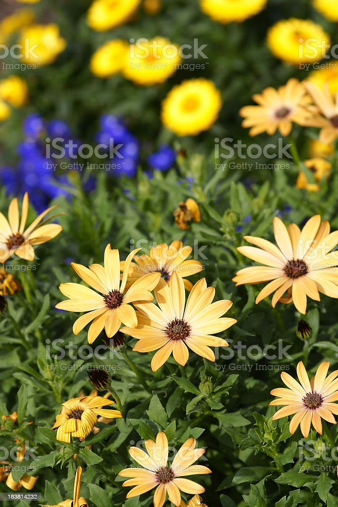 Summerflowers stock photo