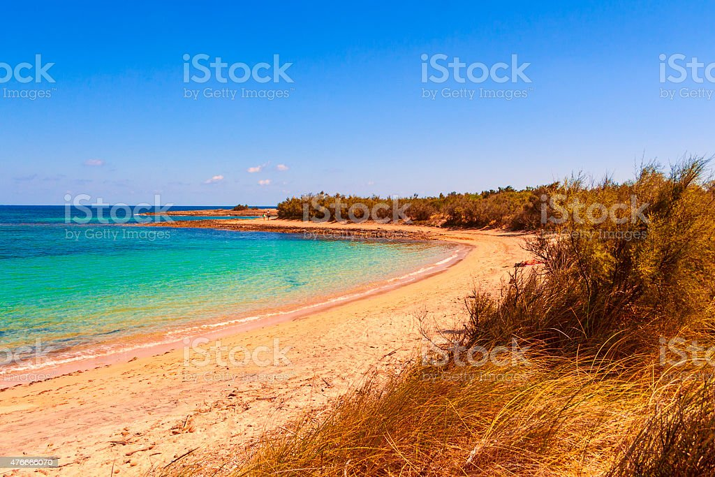 SUMMER.Mediterranean maquis: a nature reserve of Torre Guaceto.BRINDISI (Apulia)-ITALY- stock photo