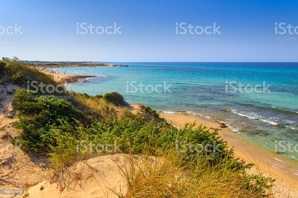 SUMMER.Mediterranean maquis: a nature reserve of Torre Guaceto.Salento (Apulia)-ITALY- stock photo