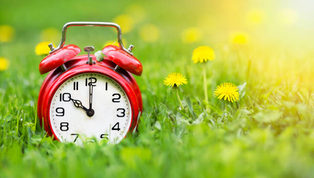 Summertime banner - alarm clock and dandelion flowers Summertime concept - web banner of alarm clock and dandelion flowers in the grass daylight savings stock pictures, royalty-free photos & images