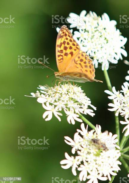 Summertime butterfly picture id1012312790?b=1&k=6&m=1012312790&s=612x612&h=wc5v 1u3gtqpqgd dalckudesnh1szt kr ewaa2h5w=