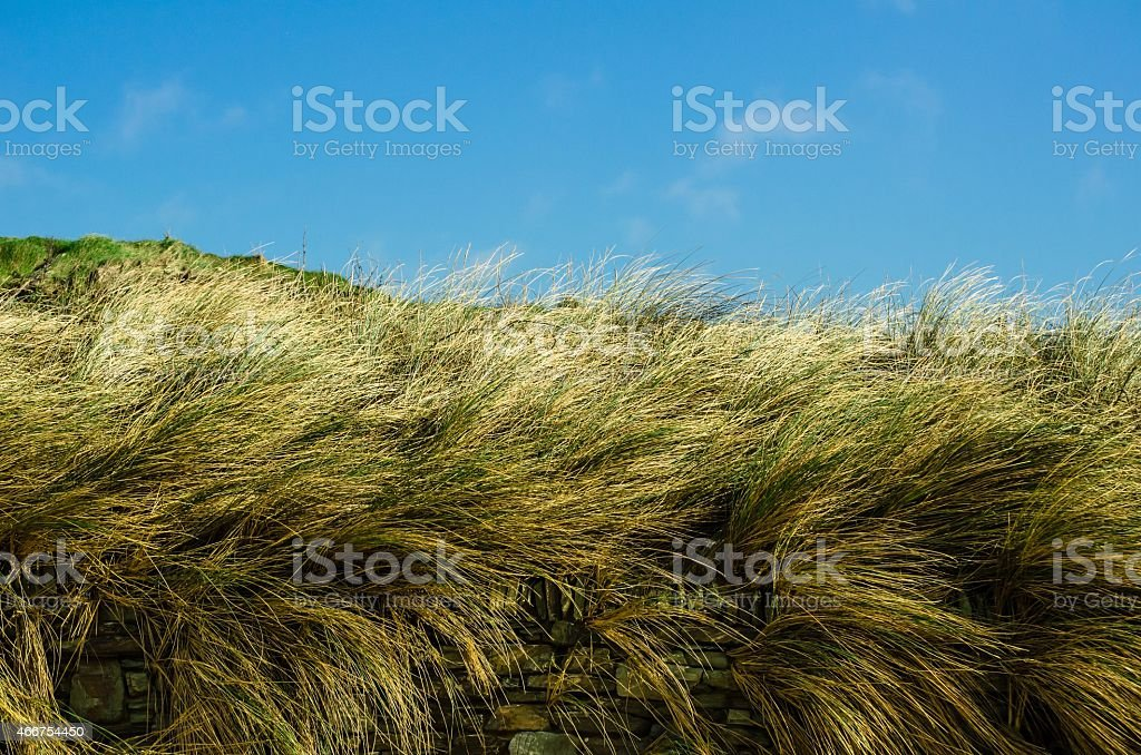 Summertime Grasses Behind a Dry Stone Wall with Blue Sky stock photo