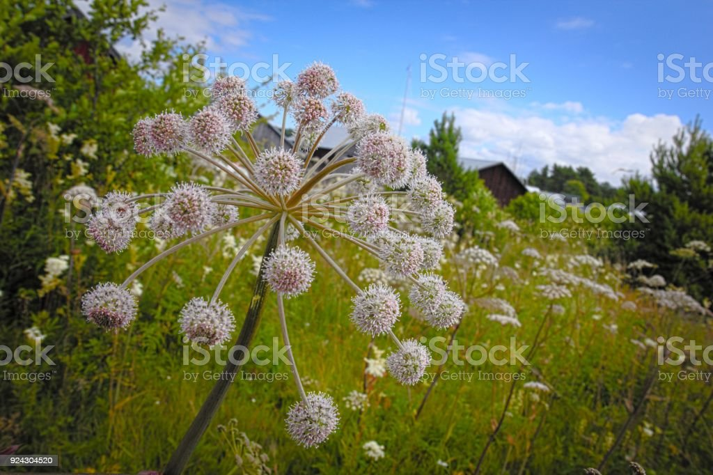 Summertime hike in Aland islands stock photo