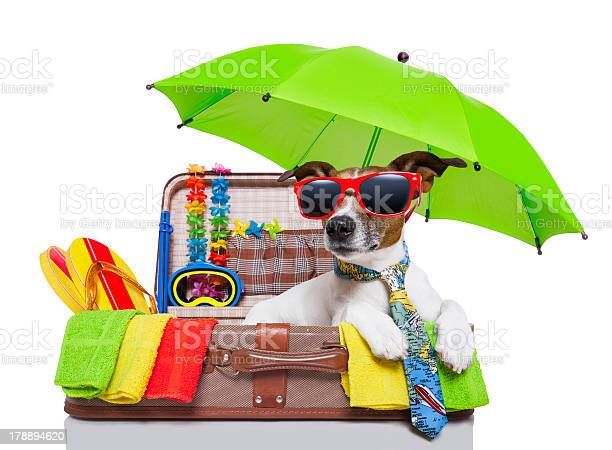 Summertime holidays baggage with a dog picture id178894620?b=1&k=6&m=178894620&s=612x612&h=nyrvhlp7dreq3via v5lqytl5i3uwgdnmtdvcnokiie=