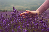 A hand of an unrecognizable woman touching lavender flowers