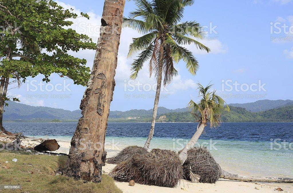 Estate sulla spiaggia tropicale foto stock royalty-free