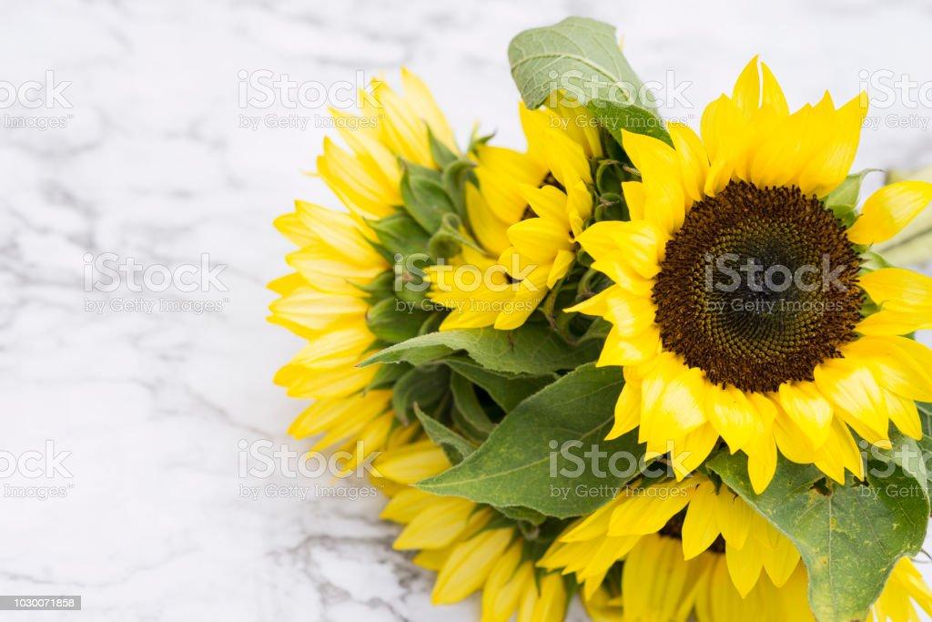 Summertime Sunflowers stock photo